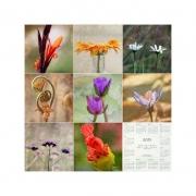 Kalenderposter 2013
