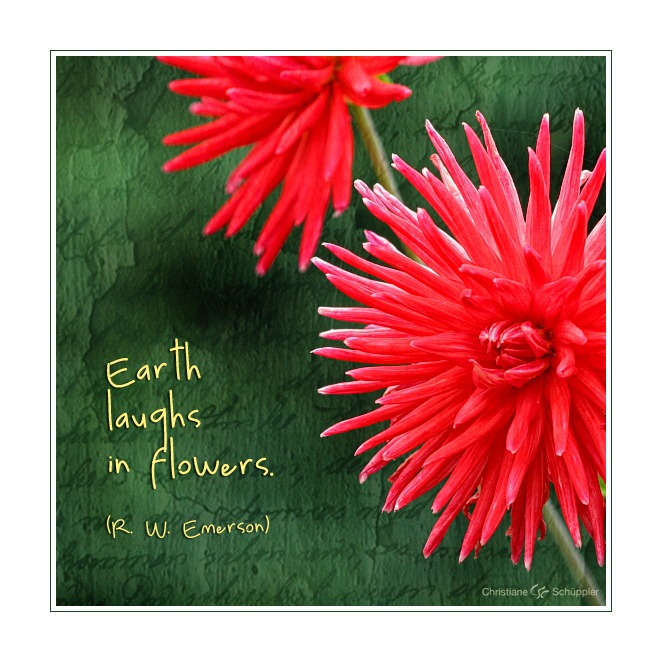 Earth laughs in flowers | Dahlien