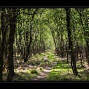 Frühling im Birkenwald | Kaltenhofer Moor