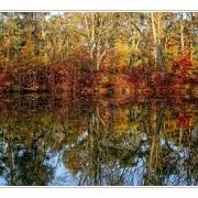 Herbstlicher See am Morgen