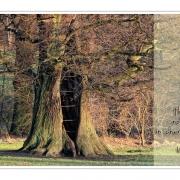 The Oak Tree | Jenischpark, Hamburg