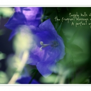 Haiku | Basho