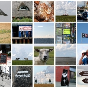 Heringe frisch vom Kutter | Nordfriesland