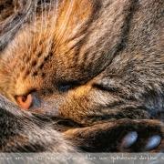 Der Meister | Katzenyoga im Tiefschlaf!