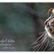 Der Tiger guckt in die Sonne