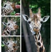 Was? WAS? :-) | Mit freundlicher Genehmigung des Tierparks Hagenbeck.