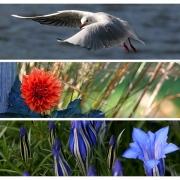 Viel Blau im Herbst
