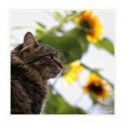 Flower-Power mit Tiger